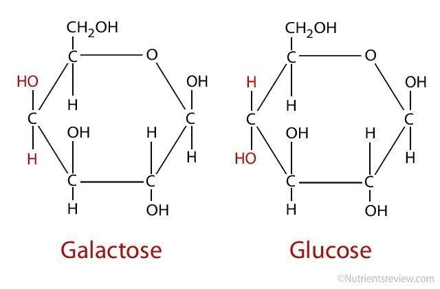 What Is Galactose?