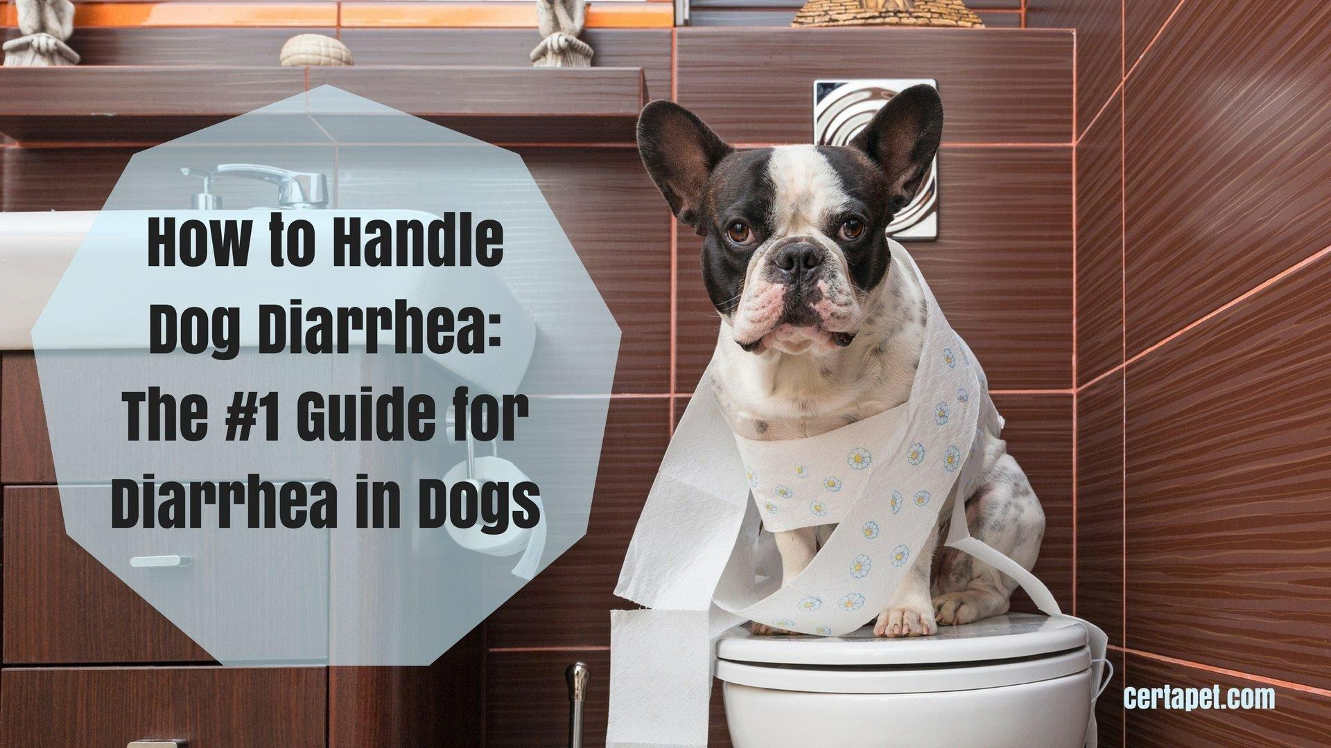 How To Handle Dog Diarrhea: The #1 Guide For Diarrhea In Dogs