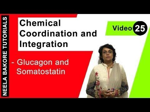 How Are Insulin And Glucagon Antagonistic