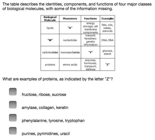 What Are The Primary Functions Of Carbohydrates In Cells Quizlet