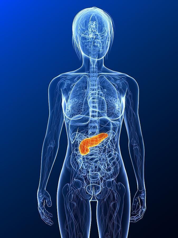 Can A Damaged Pancreas Repair Itself