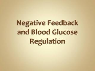 Why Is Insulin A Negative Feedback?