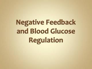 Why Is Blood Sugar Regulated By Negative Feedback?