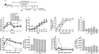 Black Ginseng Extract Counteracts Streptozotocin-induced Diabetes In Mice