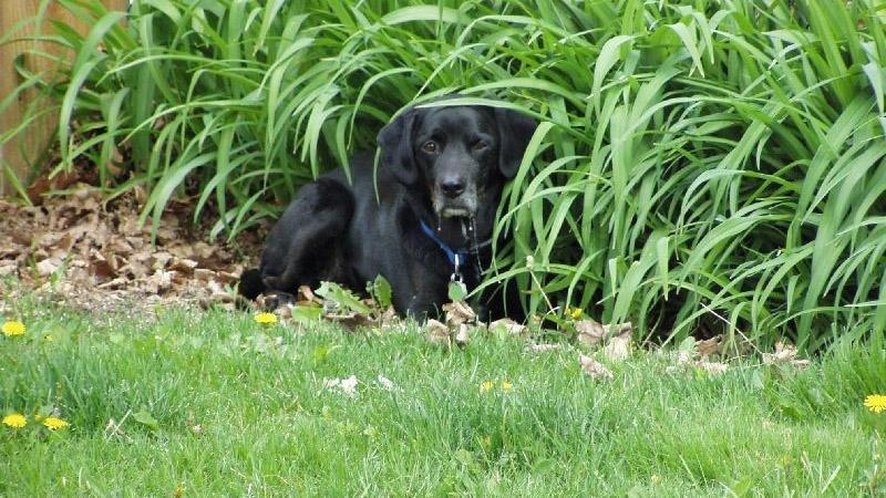 What To Do About A Sick Diabetic Dog?