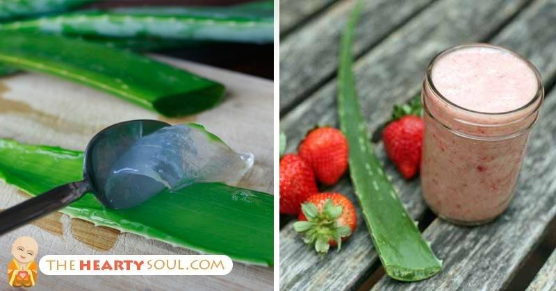 Can Aloe Vera Treat Diabetes?