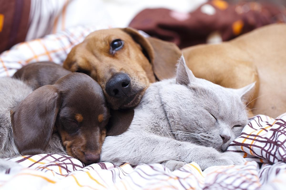 There is a New A1C Test for Diabetic Pets