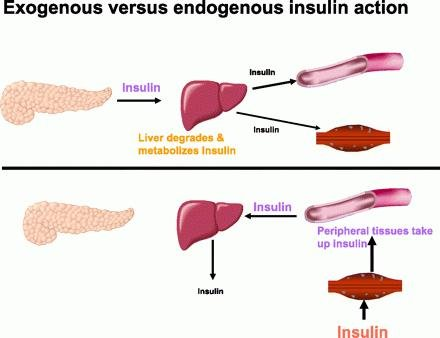 Bad Effects Of Insulin
