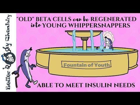 Pancreas Beta Cells