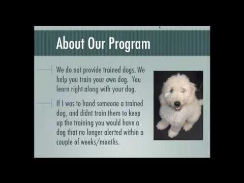 How To Train Your Dog To Be A Diabetic Alert Dog