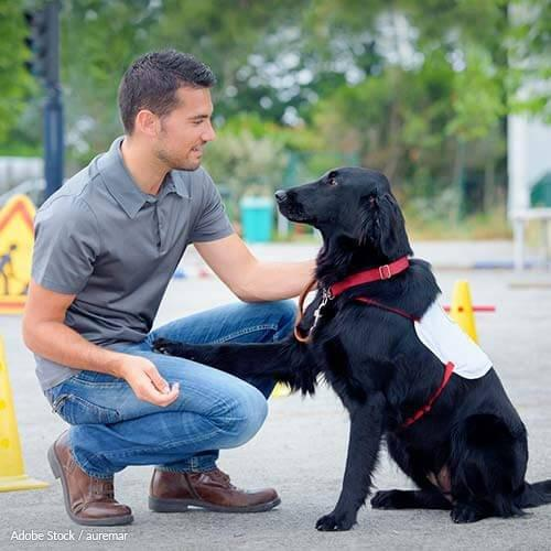 Are Diabetic Alert Dogs Covered By Insurance?