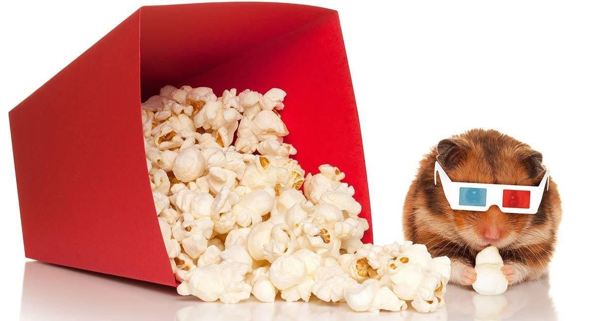 Can Hamsters Eat Popcorn – A Keeping Hamsters Healthy Guide