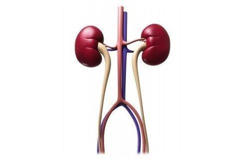 Renal Tubular Acidosis Symptoms And Treatments