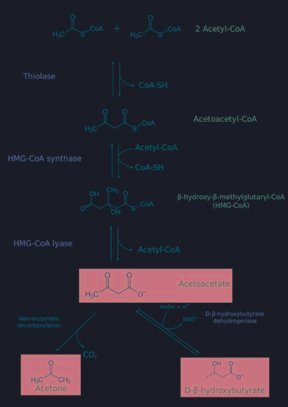 Difference Between Lactic Acidosis And Ketoacidosis