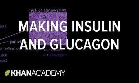 Insulin Beta Cells