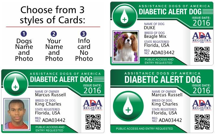 Gear: Diabetic Alert Dogs Typically Don't Wear Special Gear. Dads Should Carry Emergency Protocols In Their Vest If The Dog Would Ever Be The First Point Of Contact With An Emergency Medical Team.
