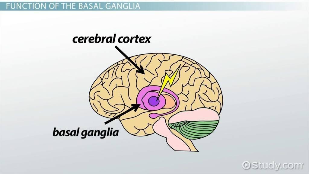 Basal Definition Biology
