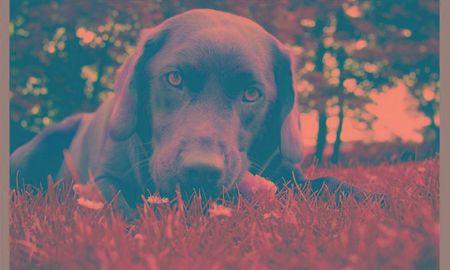 Diabetes in Dogs (Diabetes Mellitus)