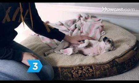 Canine Ketoacidosis Prognosis