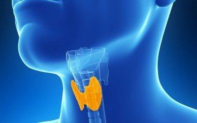 Can Thyroid Problems Cause Type 2 Diabetes?