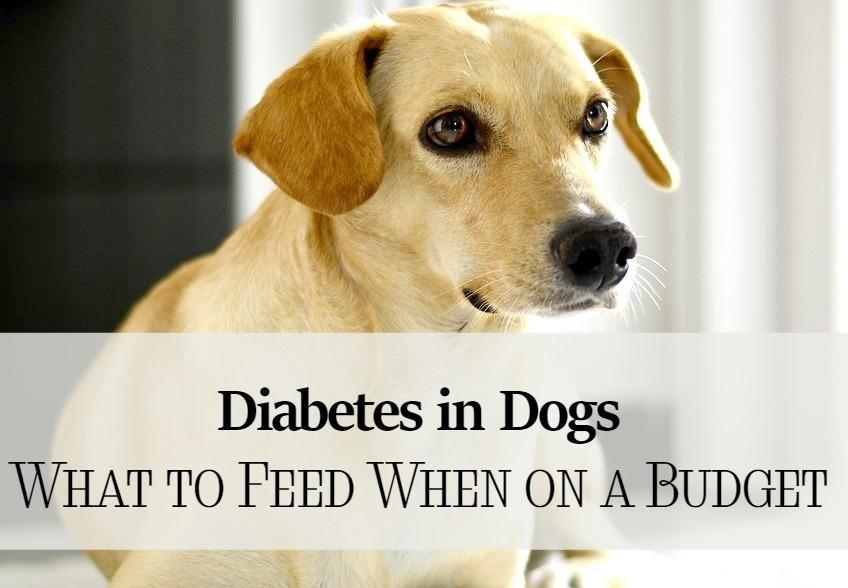 Diabetes In Dogs - What To Feed When You're On A Budget - Dogvills