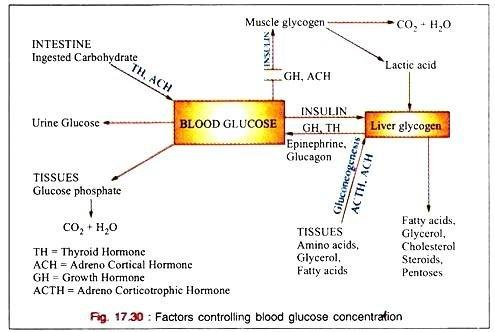 Blood Glucose: Regulation And Renal Threshold