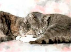 Feline Diabetes Website
