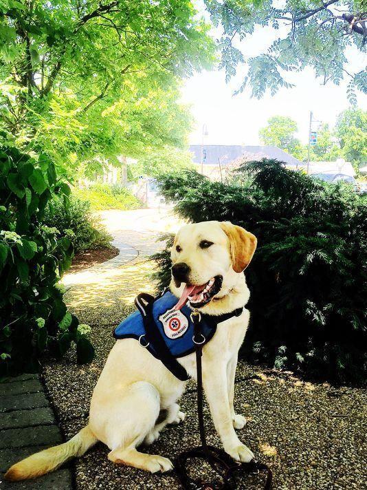 Diabetes Alert Dog Alliance