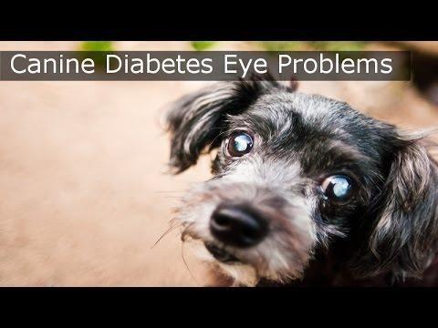 Canine Diabetic Ketoacidosis - Acvim 2008 - Vin