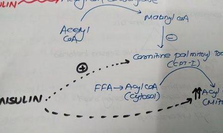 Euglycemic Dka Pathophysiology