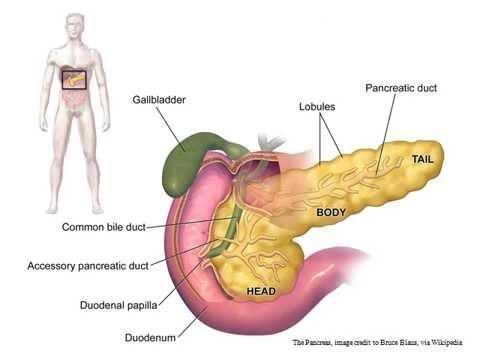 Foods To Repair Pancreas