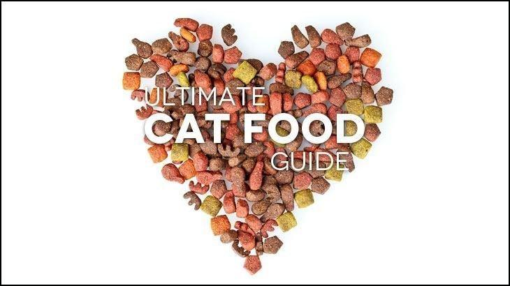 The Ultimate Review Guide To Picking The Best Cat Food For Your Feline Friend