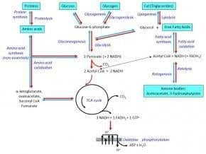 Metabolism, Insulin And Other Hormones