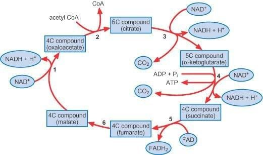 Chemistry For Biologists: Respiration