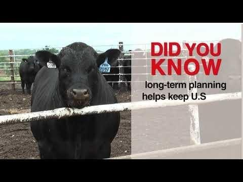How To Treat And Prevent Acidosis In Cattle