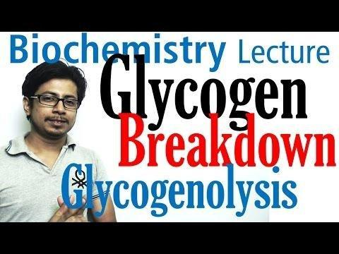 Glycogen Biosynthesis; Glycogen Breakdown