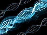 Is Diabetes Genetic Disease?