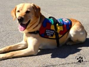 Diabetic Alert Dogs By Sdwr How To Prepare For The Cost Of A Service Dog - Diabetic Alert Dogs By Sdwr
