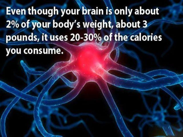 Is The Brain Fueled By Fat, Protein, Or Carbs?