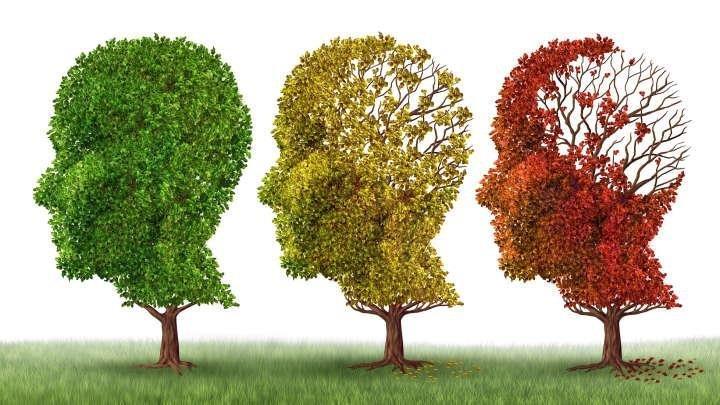 Diabetes Drug Reverses Memory Loss In Mice Suffering From Alzheimer's