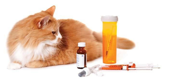 Lantus For Cats Dosage
