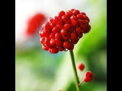 Antidiabetic Effects Of Panax Ginseng Berry Extract And The Identification Of An Effective Component