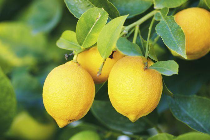 Do Lemons Affect Blood Sugar?