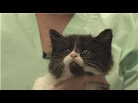 Update On Diabetic Cat (kitten, Eating, Weight, Feline) - Cats - - City-data Forum