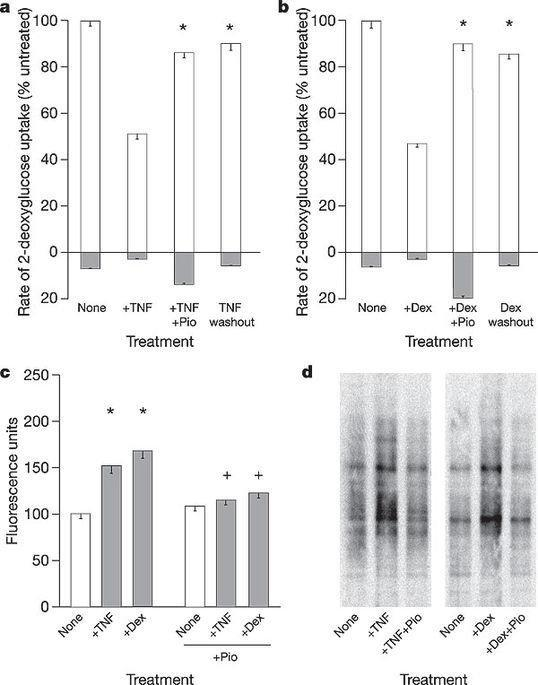 Reactive Oxygen Species Have A Causal Role In Multiple Forms Of Insulin Resistance