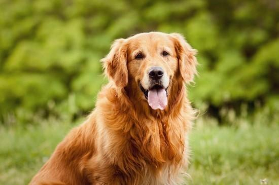 Diabetic Ketoacidosis In Dogs And Cats