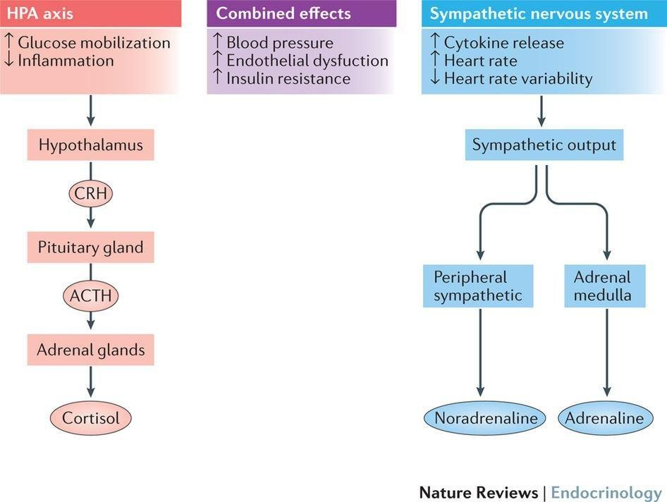 Stress And Diabetes Type 2