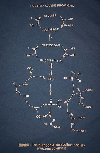 Gluconeogenesis: The Body Makes It Own Carbs
