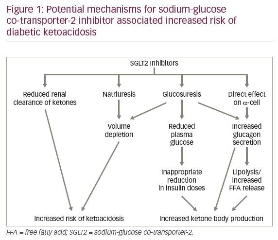 Sodium-glucose Co-transporter-2 Inhibitors In Type 1 Diabetes—a Dangerous Ally