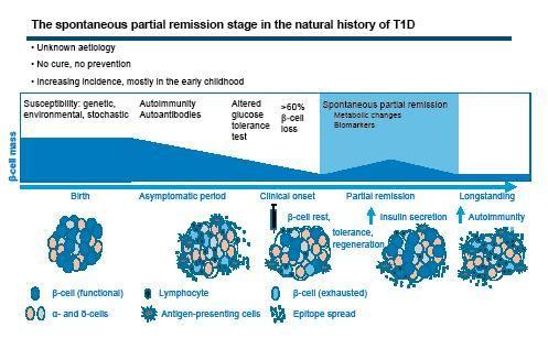 Diabetes Type 1 Remission